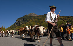 "The ""Almabtrieb"" in South Tyrol"